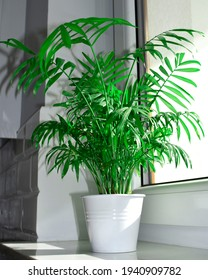 plant palm tree in a white pot on a windowsill - Shutterstock ID 1940909782
