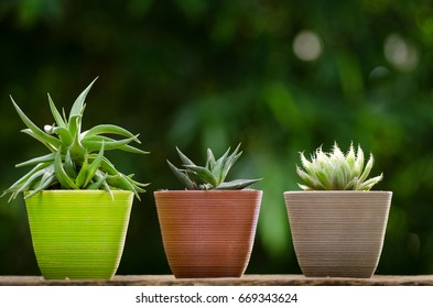 plant pot with cactus with green background