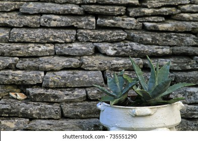 Plant in pot in front of stone wall