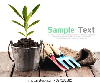 Plant in pot and garden tools on perspective wood,white background