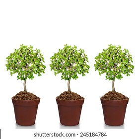 plant in pot Isolated over white