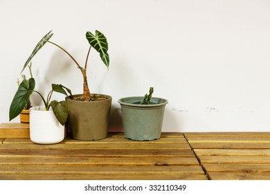 plant pot on wooden table
