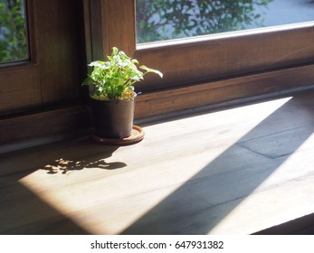 Plant pot standing next to wooden window with sunlight