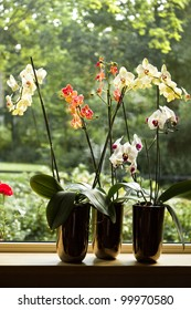 Plant pots with Moth Orchids or Phalaenopsis in window with glassreflections and trees in background outdoors
