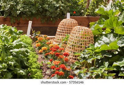 Plant protectors made of cane in the vegetable plot
