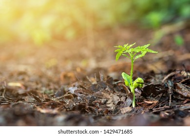 Plant with rain water drop and sunlight over green background environment