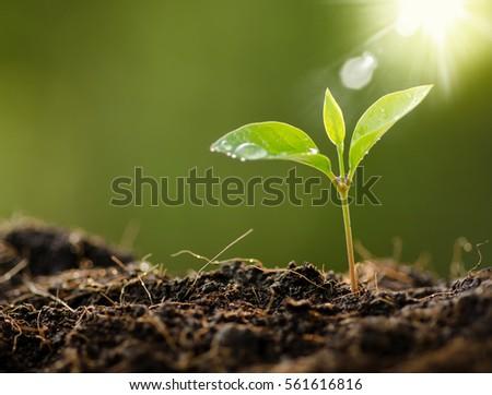 plant rain water drop sunlight over の写真素材 今すぐ編集