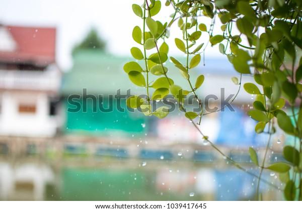 plant with raining. soft focus.