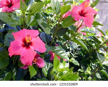 Plant with red flower called hibiscus or hibiscus