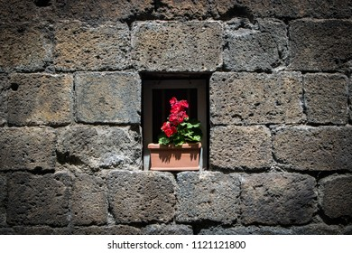 A plant with red flowers in a window in a wall