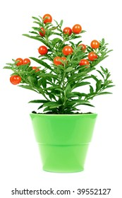 plant with red fruit in a green pot