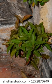Plant roots grow down into the concrete floor and it can break down. The roots of tree can force deeper into the concrete and they continue to grow, splitting the building apart over the time.
