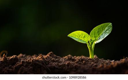 plant sapling growing on organic soil with sunlight