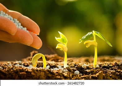 Plant seed growing concept, Farmer hand giving fertilizer to young plant