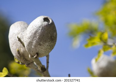 Plant seed on a branch
