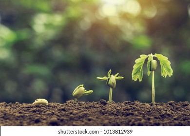 plant seeding growing step with sunlight with vintage tone filter . agriculture concept in farm