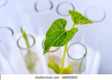 Plant seedlings growing inside of test tubes. Shallow DOF