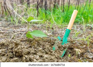 Plantar pequeñas planchas verdes en el Día del Trabajo