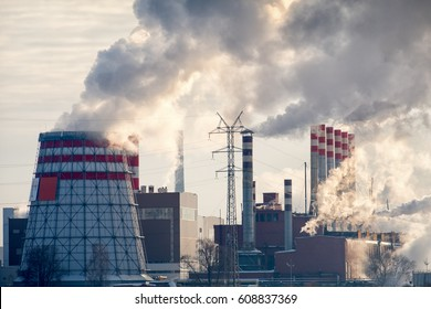 Plant with smoke at winter day