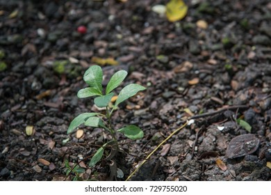 plant in soil background