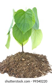 Plant and soil isolated on white background