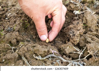 plant soybean in the soil in the countryside