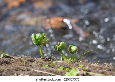 plant in spring