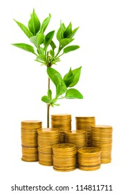 Plant and stacks of coins isolated on white background