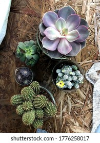 plant succulents in chemistry beakers