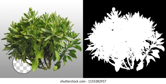 Plant in summer isolated on a transparent background via an alpha channel of great precision. Very high quality mask without unwanted edge. High resolution for professional digital composition.