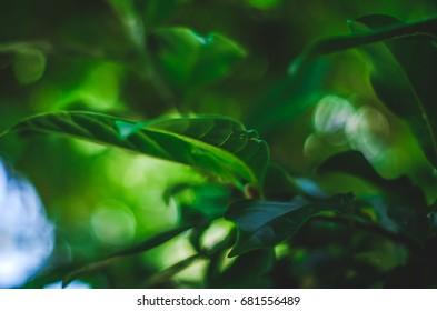 Plant in sunlight