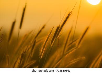 Plant and sunrise
