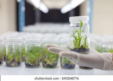 plant tissue culture bottle on hand hold