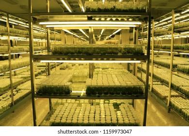 Plant Tissue Culture Images, Stock Photos & Vectors