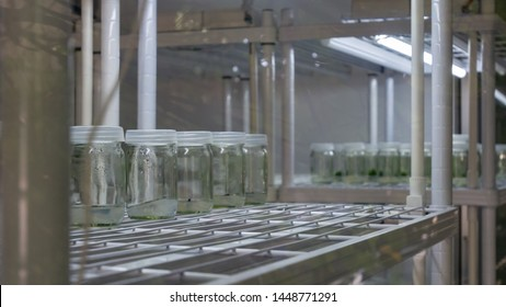 Plant tissue culture collection shelves in tissue culture room science laboratory