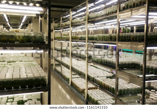 Plant Tissue Culture Collection Shelves Tissue Stock Photo