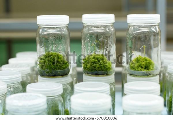 Plant Tissue Culture Laboratory Stock Photo (Edit Now) 570010006