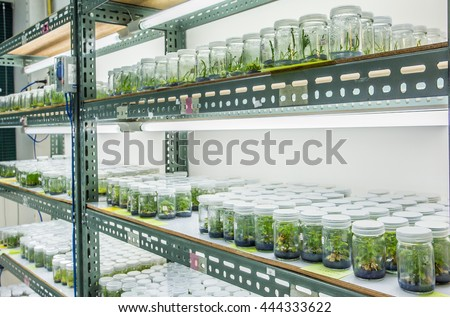 Plant tissue culture in the laboratory, lab tissue in university