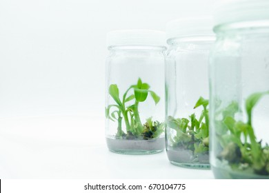 plant tissue culture on white background