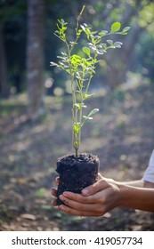 Plant a tree.