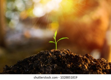 Plant a tree with the backdrop of the sunset and nature background.