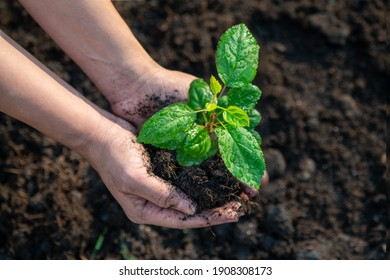 Plant the tree in the garden as save world concept. Close up woman hand planting small trees in the garden.