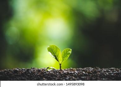Plant tree Growing On Field nature light