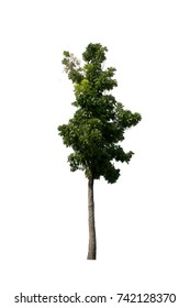Plant tree isolated on white background for Decoration work or landscape design