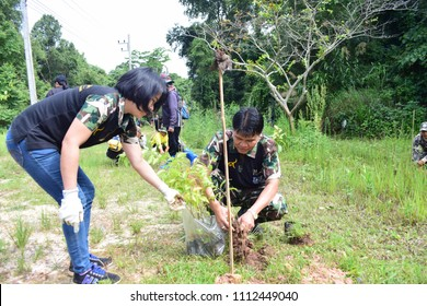 plant a tree . National Park Planting a Tree.On 05/29/2018,At Phu Hin Rong Kla National Park.Nakhon Thai District/Phitsanulok Province-Thailand.an unidentiedwomansells