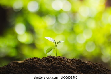 Plant a tree Natural tree Green backgroun