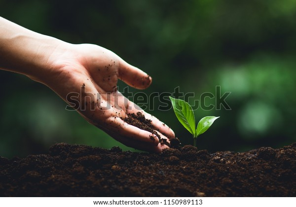 Plant tree in neutral background Close-Up Of Fresh Green Plant,Young hand Tree in hand
