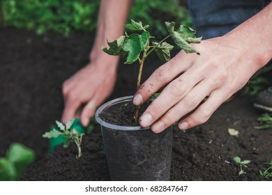 To plant a tree. The person plants a tree. To plant a tree in a pot.