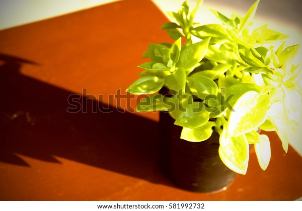 plant in the tree pot on the wooden background in vintage design