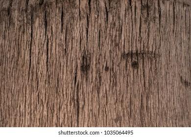Plant tree texture. Palm tree texture.
